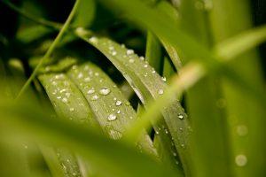 Dewdrops_RebeccaUhlman